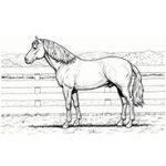 horse2-min.jpg