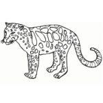 tigre-min.jpg